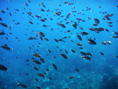 shoal: shoal of fishes Stock Photo