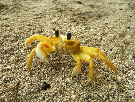 buckler: Crab in sand