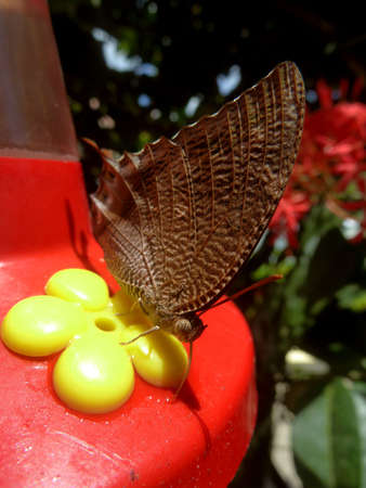 and diurnal: butterfly