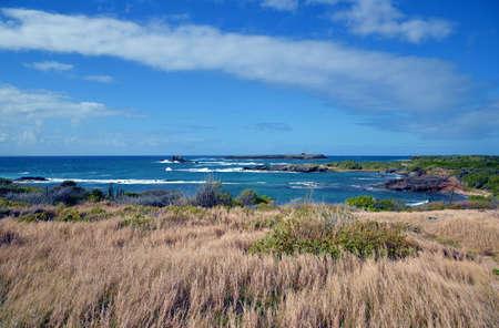 windswept: windswept coast