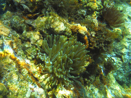 anemone on the seabed