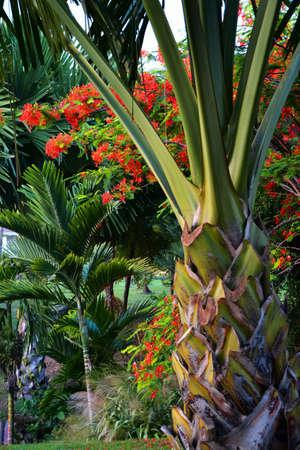 Tropical plant life Stock Photo