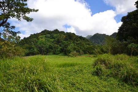 tropical greenery Stock Photo