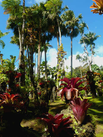 bromeliad plant and palm trees to the Caribbean
