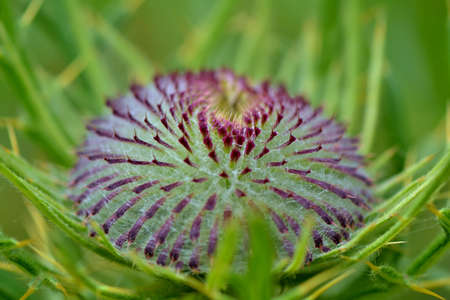 thistle plant: Thistle plant Stock Photo