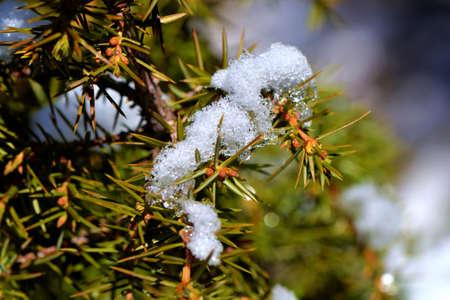 snow flakes on tree Stock Photo - 62594662