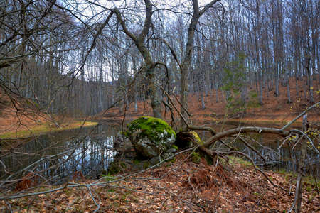 pond on the forest Stock Photo - 62594663
