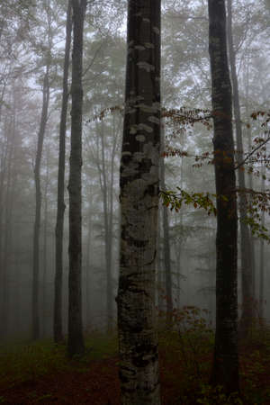 forest in fog Stock Photo - 59850226