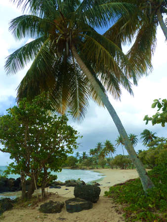 a beach on tropical island