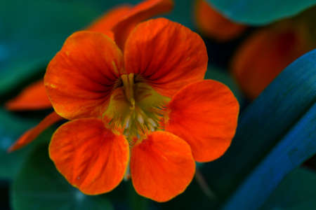 orange meadow flower Stock Photo - 63383858