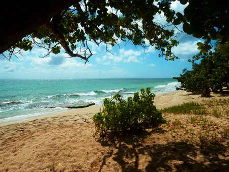Beach in the tropics Stock Photo - 63377418