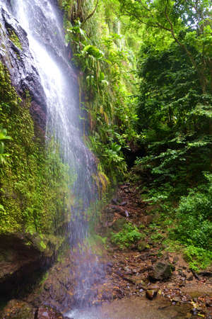 Waterfall in rain forest