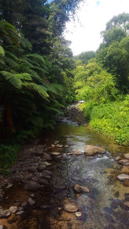 River on the tropical forest