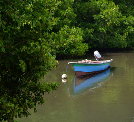Fishing boat in the mangroves