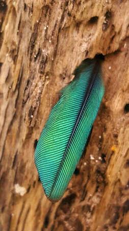 ハチドリの羽根
