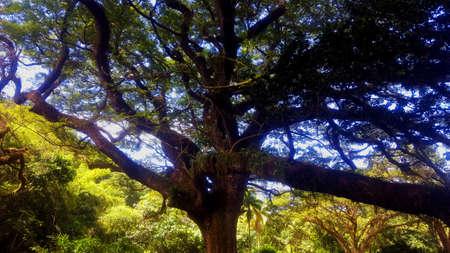 세속적 인 나무