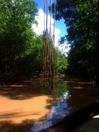 mangroves,