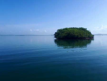isle of mangroves