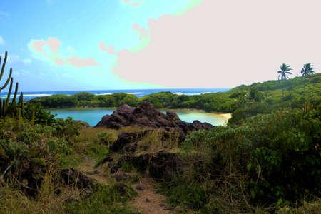 Creek in the tropics
