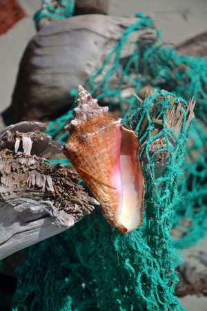 Seashell on fishing net