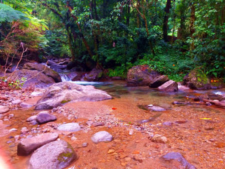 Brook through tropical Forest Stock Photo