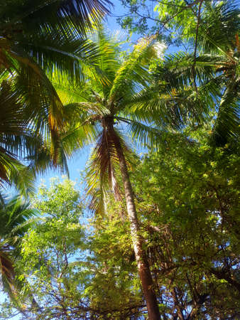 Coconut Palm Stock Photo - 114579175