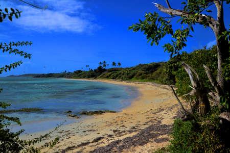 sandy beach with tropical vegetation
