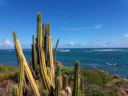 succulent plant in ventilated coast