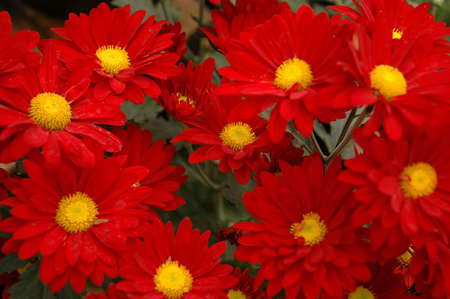 aster photo