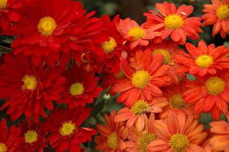 aster Stock Photo - 4256068