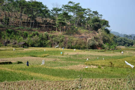 ricefield: ricefield