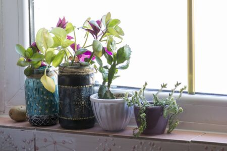 Flowers in the pots on the kitchen window shelf, modern apartment spaces Imagens