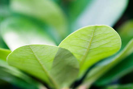 organics: Green leaf background low aperture Stock Photo