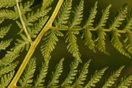 venation: Detail of leaf