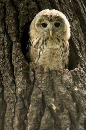 Small owlet in a nest photo