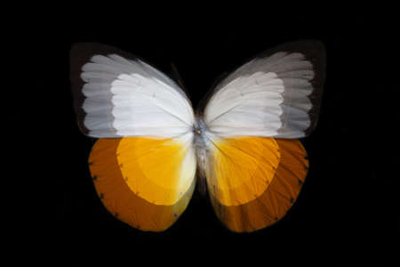 lightsome: Butterfly zoom