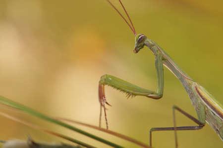 rebeldia: Mantis detalle