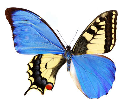 Butterfly wings Stock Photo - 3562501
