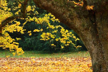 Beautiful autumn park Stock Photo - 3969382