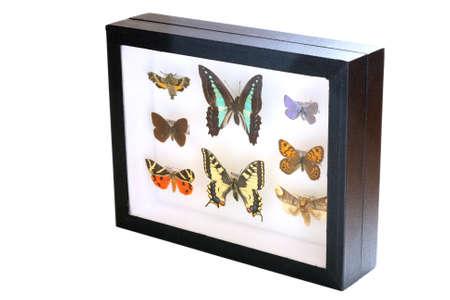 frailty: Collection of butterflies