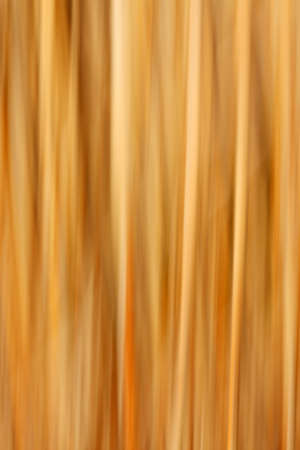 splendid: Abstract motion blurred reed background