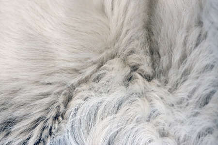 pelage: White texture of fur of a dog