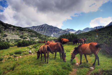 Horses in Bulgarian mountains (Rila) Stock Photo - 4619838
