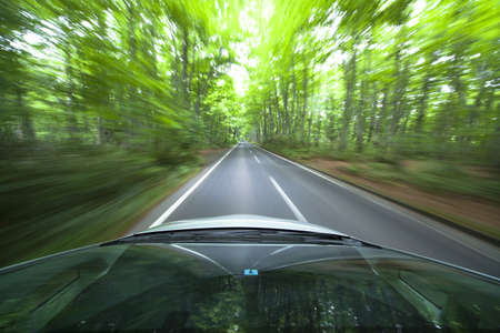 car driving fast into forest photo