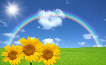 緑の草と虹とヒマワリ