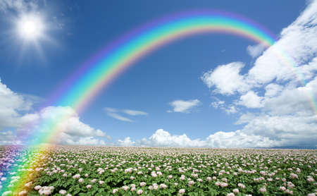 clouds: garden: Potato field with sky and rainbow