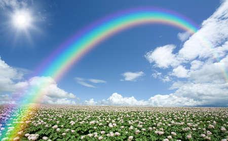 Potato field with sky and rainbow