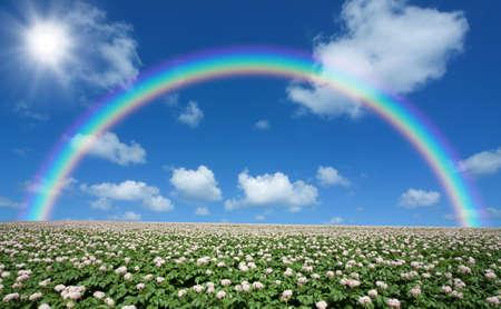 Potato field with sky and rainbow photo