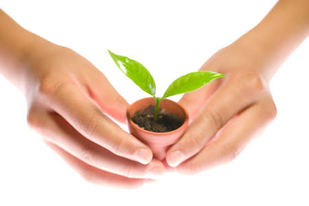 small plant: Plant in hand on white background Stock Photo