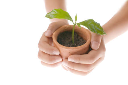 Plant in hand on white background photo